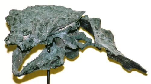 コアフイラケラトプス