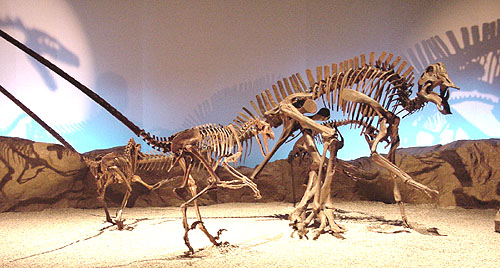 ヒパクロサウルス