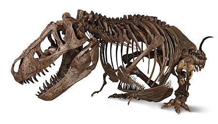 ティラノサウルスの画像 p1_10